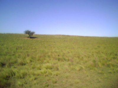 campoGanadero